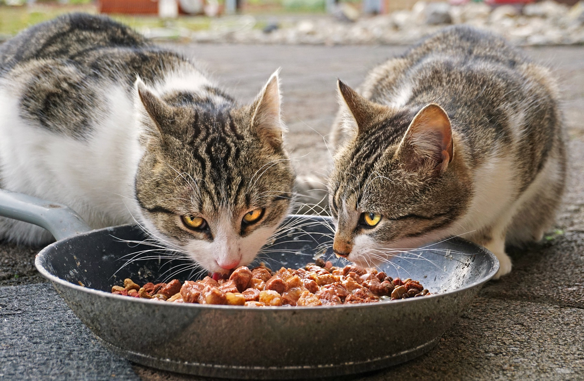 The Best Dry Cat Food (Review) in 2020